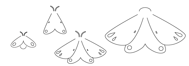 moths evolution